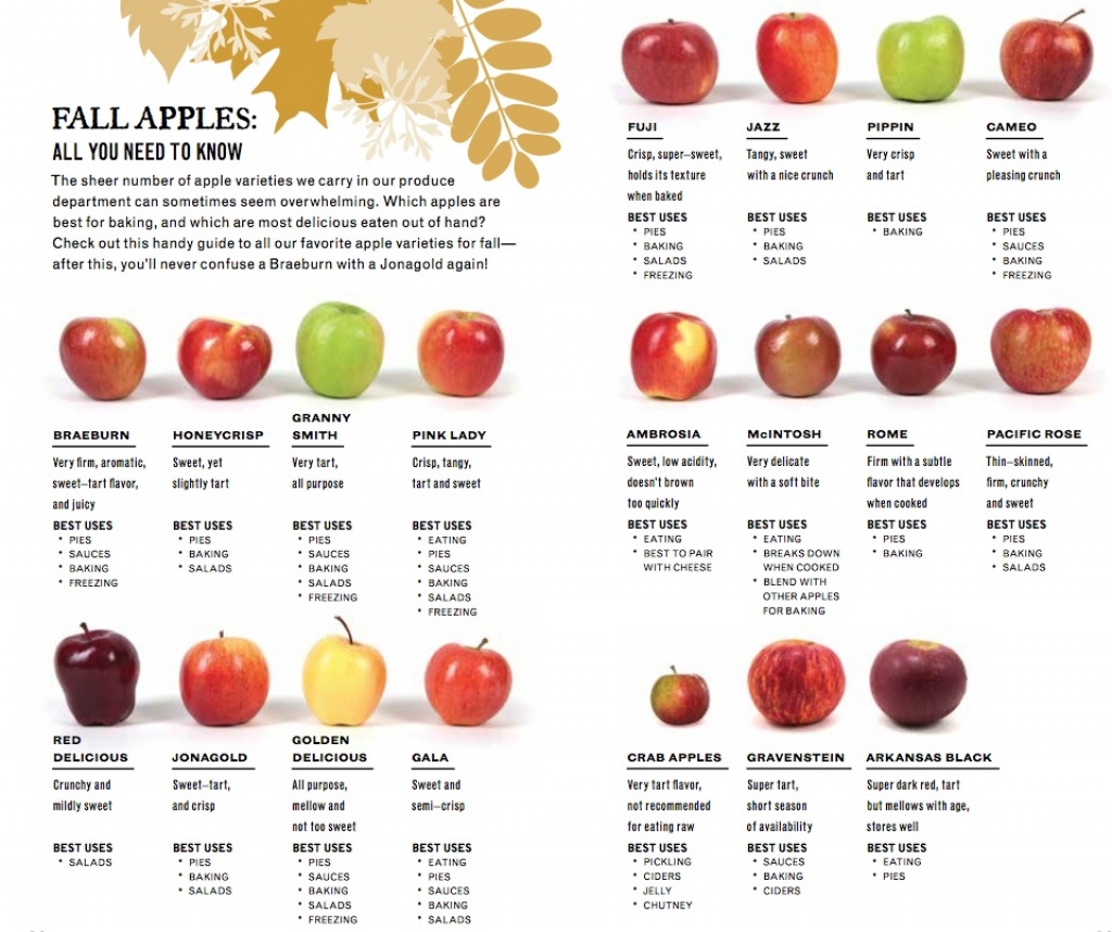 apple varieties with pictures wwwimgkidcom the image