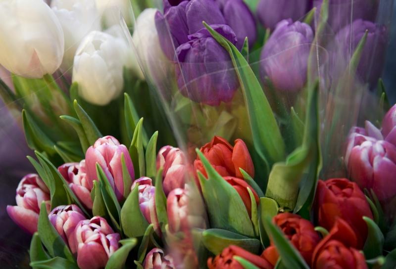 tulips tips